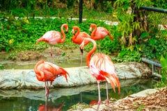 Flamingovogel im Zoo Lizenzfreie Stockbilder