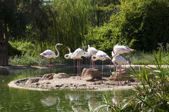 Flamingovogel in meerfoto Stock Afbeelding