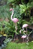 Flamingovogelbaumuster Stockfotografie