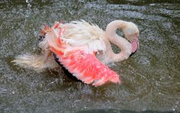 Flamingowas royalty-vrije stock afbeeldingen