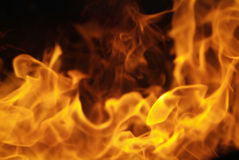 flamm för kantbrand Fotografering för Bildbyråer