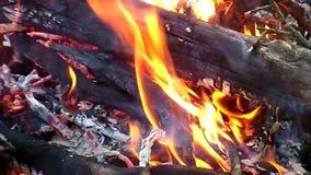 Flamma stock video