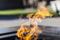 Flamma med en blured bakgrund Royaltyfria Foton