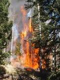 Flammande skog Arkivbilder