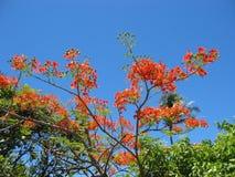 flammatree royaltyfri fotografi