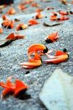 Flamme de la chute de forêt sur le plancher Photo libre de droits