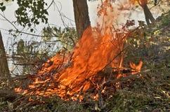 Flamme de la destruction non désirée de bâton Photographie stock