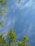 Flamme des grünen Blattes auf Hintergrund des blauen Himmels Lizenzfreie Stockfotografie
