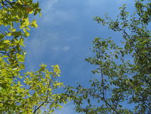Flamme des grünen Blattes auf Hintergrund des blauen Himmels lizenzfreie stockbilder