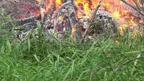 Flamme du feu détruire la faune et la flore en nature 4K clips vidéos