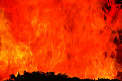 Flamme géante d'incendie au-dessus des arbres. Image stock