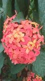Flamme orange des fleurs en bois image libre de droits