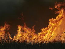 Flammen auf Feld während des Feuers lizenzfreies stockbild