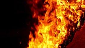 Flammen eines Feuers Langsame Bewegung stock video