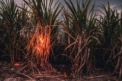 Flammen im Zuckerrohr Stockbild