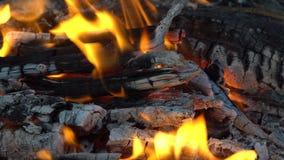 Flammen und Kohlen im Feuer stock video footage