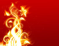 Flammende Blume Stockfoto
