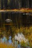 Flammender Fall färbt das Reflektieren in einen Yosemite-Parkteich Stockbilder