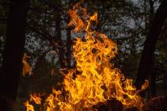 Flammenzungen Lizenzfreies Stockbild