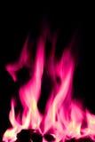 Flammes ouvertes d'incendie de rose et de blanc photos stock