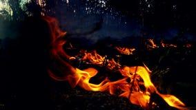 flammor Fotografering för Bildbyråer
