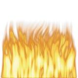 flammor framförde högväxt arkivbild