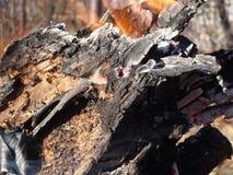 Flammor kryper upp sidan av ett stycke av vedträ i en öppen lägereld arkivfoto
