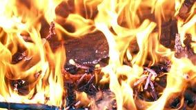 Flammor och glöd stock video