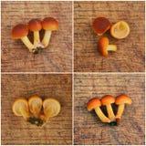 Flammulina velutipes, enokitake μανιτάρι Στοκ Φωτογραφίες