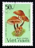 Flammulina velutipes, serie, około 1983 Zdjęcie Stock