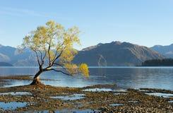 Flanc de coteau écossais Photos libres de droits