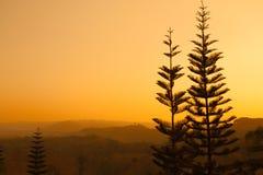 flanc de coteau avec la forêt conifére parmi le brouillard sur un pré dans le MOU Photo libre de droits
