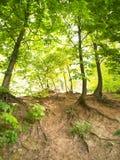 Flanc de coteau boisé Images stock