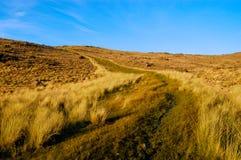 Flanc de coteau dans le patagonia Photo libre de droits