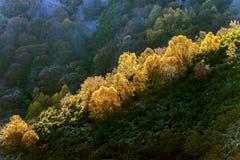 Flanc de coteau de forêt dans les montagnes galiciennes Image stock