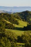 Flanc de coteau de vert de la Californie Photographie stock