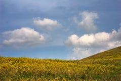 Flanc de coteau jaune Photographie stock