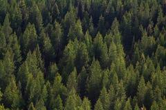 Flanc de montagne à feuilles persistantes Photo libre de droits