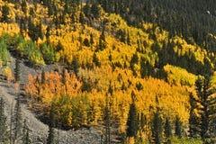 Flanc de montagne Aspen Image stock