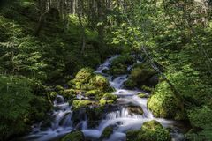 Flanc de montagne national frais de Forest Stream Ambles Down The photo stock