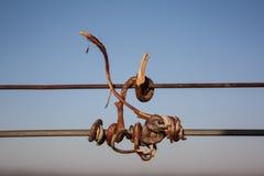 Flanca suchy winnica fotografia stock