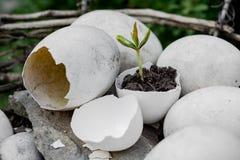 Flanca w eggshell fotografia stock