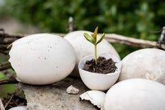 Flanca w eggshell zdjęcie stock