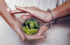 Flanca w szklanym pucharze Ja ` m w żeńskich rękach Zdjęcia Stock