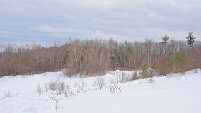 Flanco de rolamento do monte coberto na neve com as árvores desencapadas e coníferas e os arbustos fotografia de stock royalty free