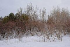 Flanco de rolamento do monte coberto na neve com as árvores desencapadas e coníferas e os arbustos imagem de stock