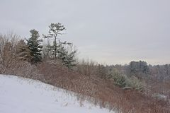 Flanco do monte com arbustos e as árvores desencapados do abeto vermelho na neve no parque nacional de Gatineau fotografia de stock royalty free