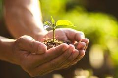 Flancowań drzew opieki save Drzewny świat ręki ochrania rozsady w naturze i świetle wieczór Obrazy Stock