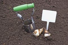 Flancowania żarówek daffodils target503_1_ znaka Obraz Stock