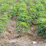 flancowania ogrodowy warzywo Obrazy Stock